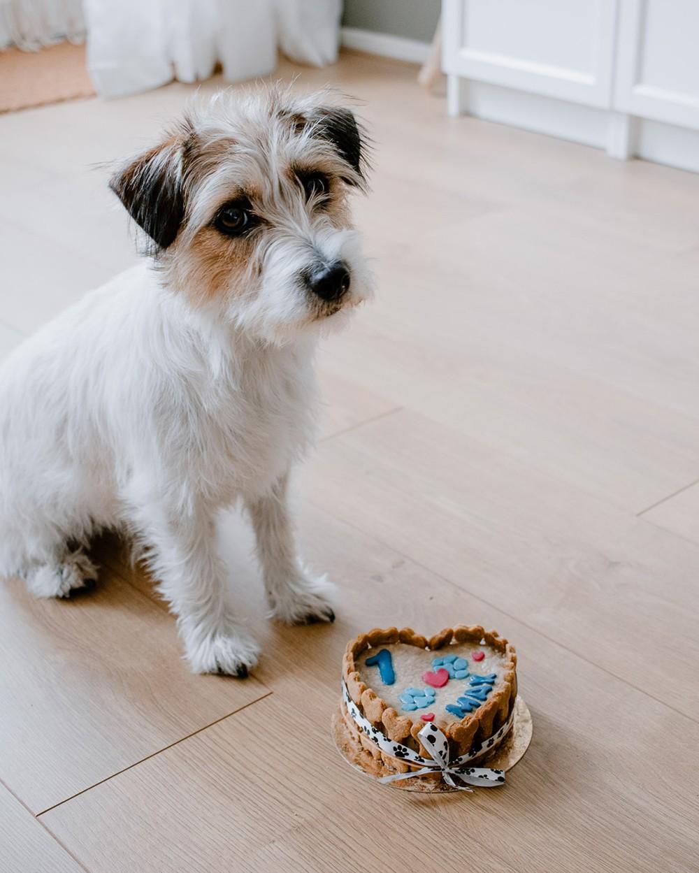 Hoera! Max is 1 jaar | Angelina Catharina